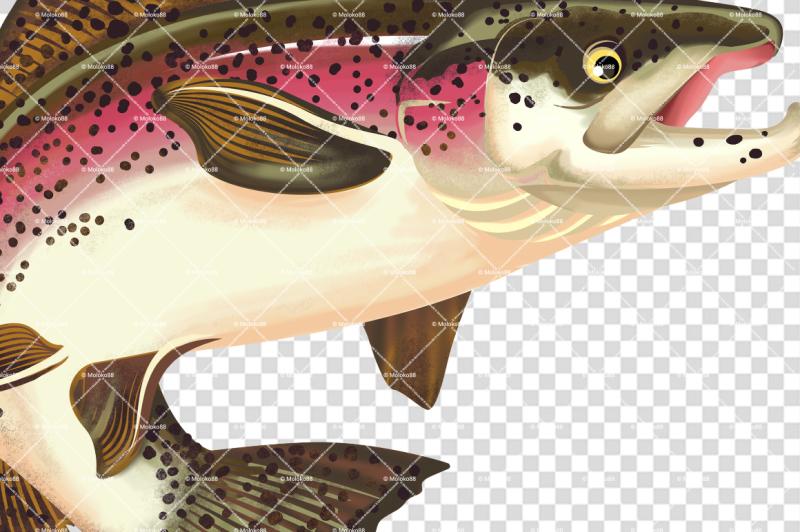 salmon-fish-illustration