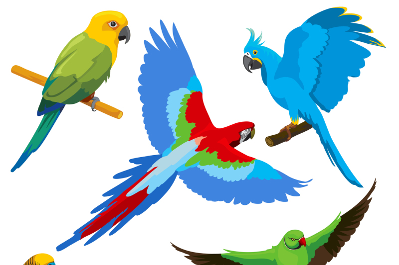 cartoon-parrots-tropical-birds-vector-set