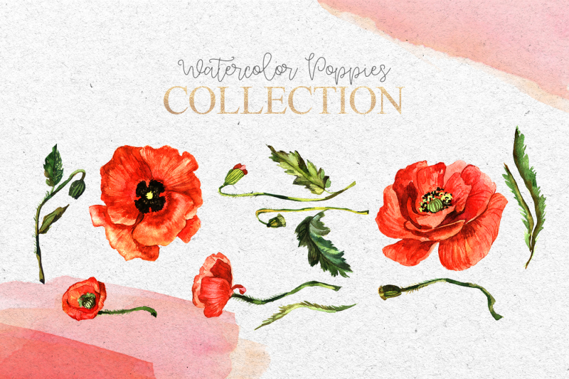 red-poppies-flowers-eps-svg-png-jpg-clipart-watercolor