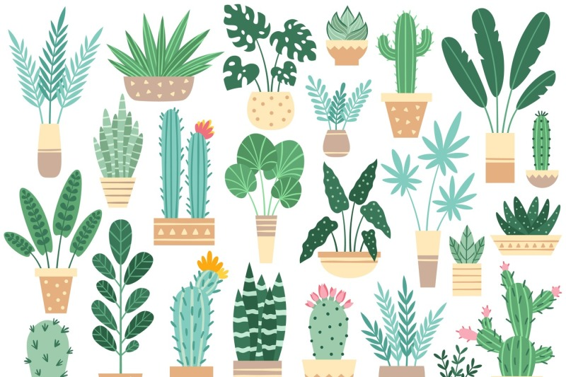 home-plants-in-pots-nature-houseplants-decoration-potted-houseplant