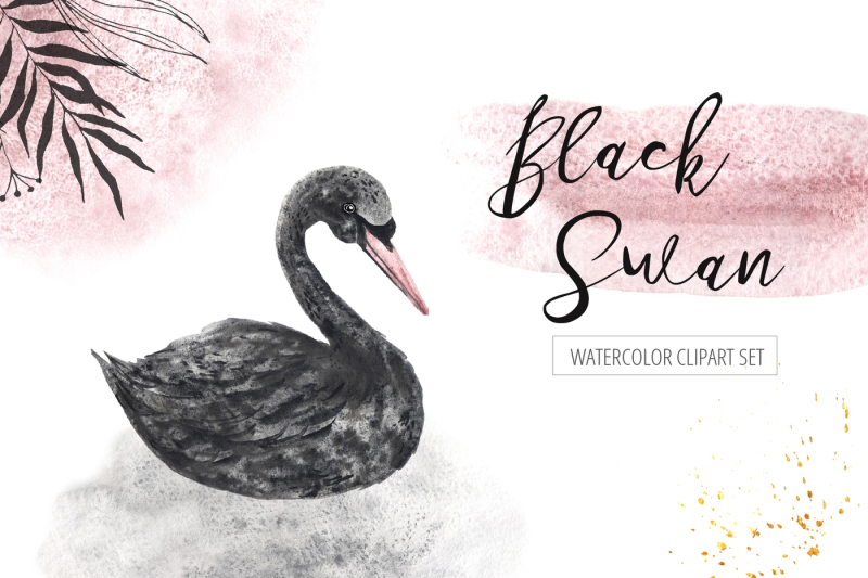 watercolor-black-swan-set