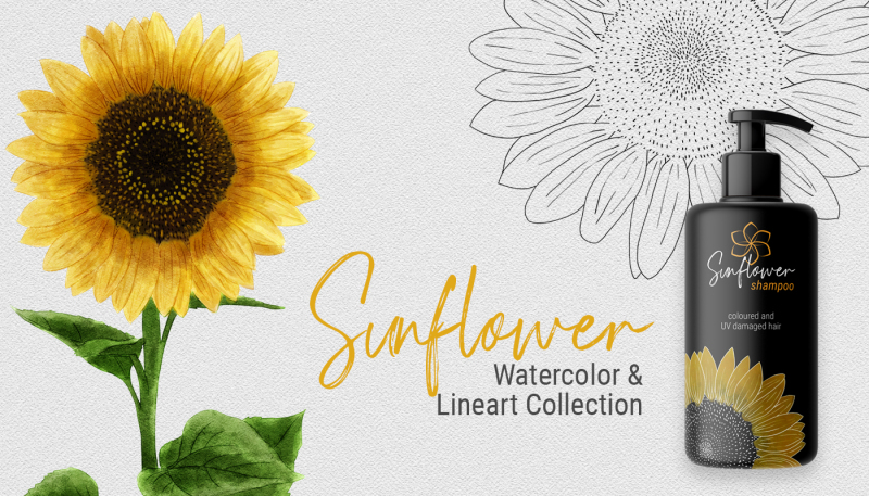 sunflower-watercolor-amp-lineart-collection
