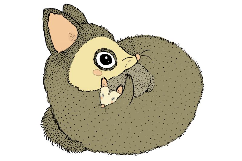 possums-5-cute-images-clip-art-illustrations-png-jpeg