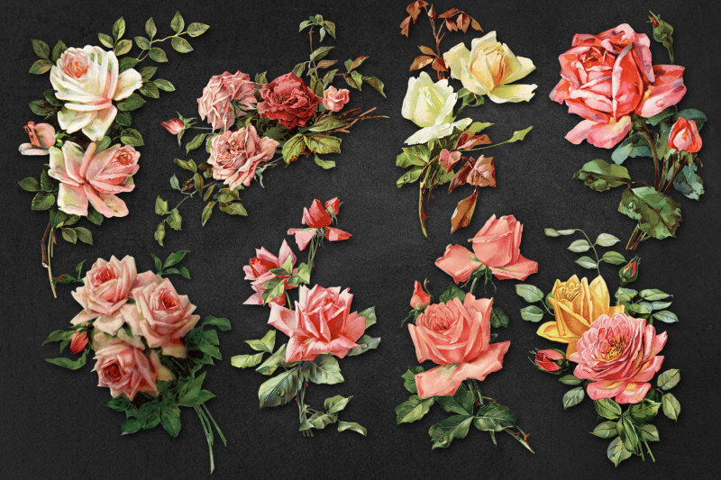 vintage-large-scale-rose-graphics