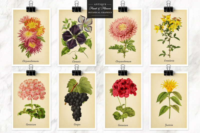 antique-fruit-and-flowers-graphics