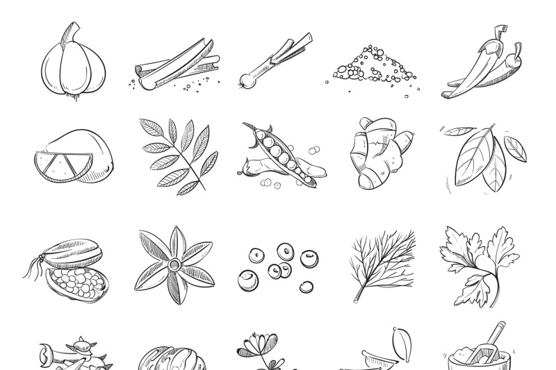 doodle-spices-and-herbs-vector-hand-drawn-set