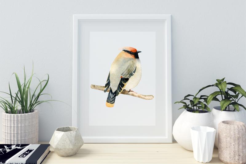 watercolor-birds-clipart