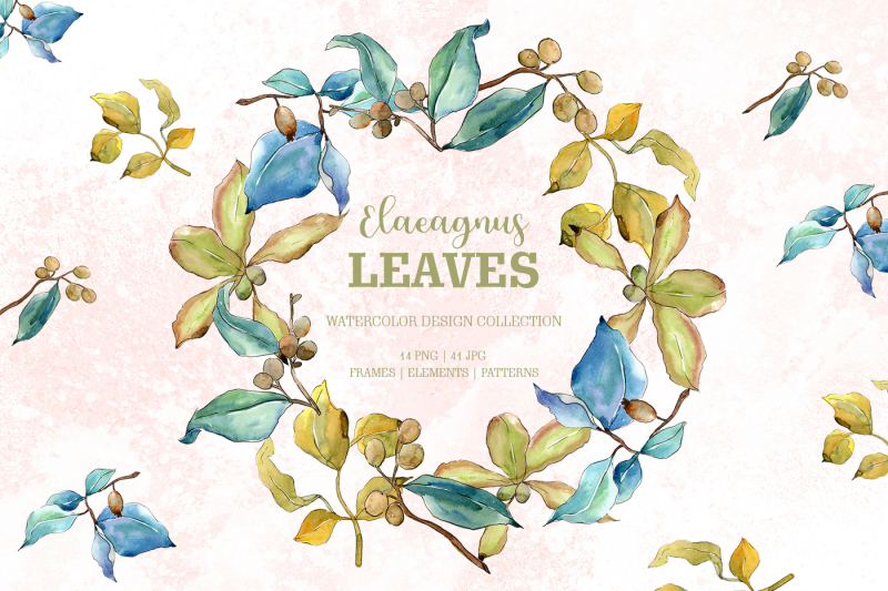 elaeagnus-leaves-watercolor-png