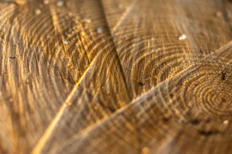 cutted-stump