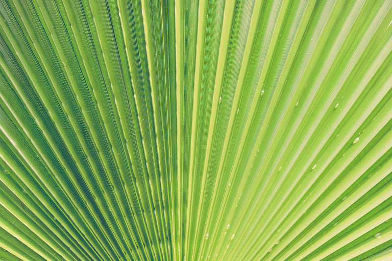 11-palm-leaves-textures