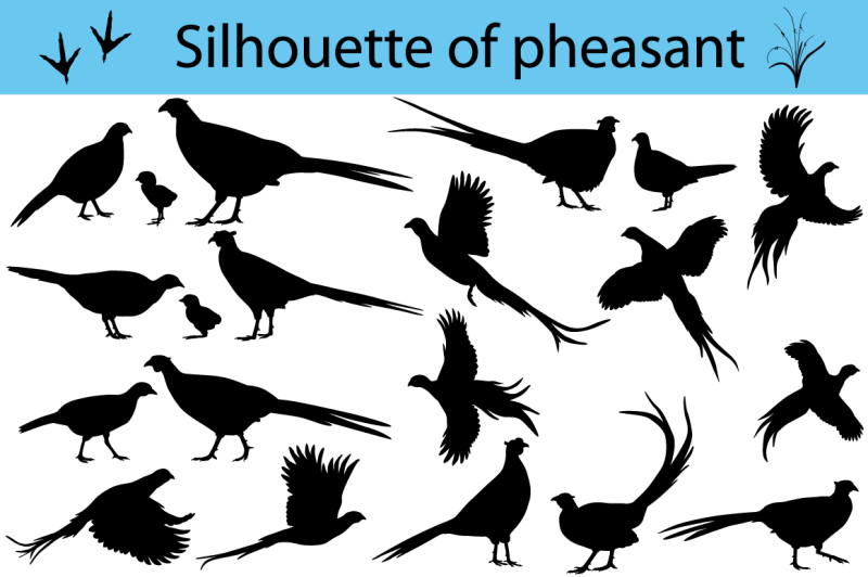 silhouette-of-pheasant