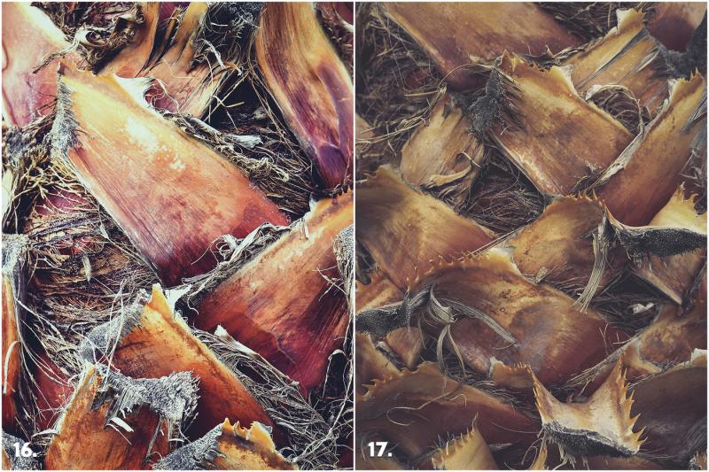 29-palm-bark-textures
