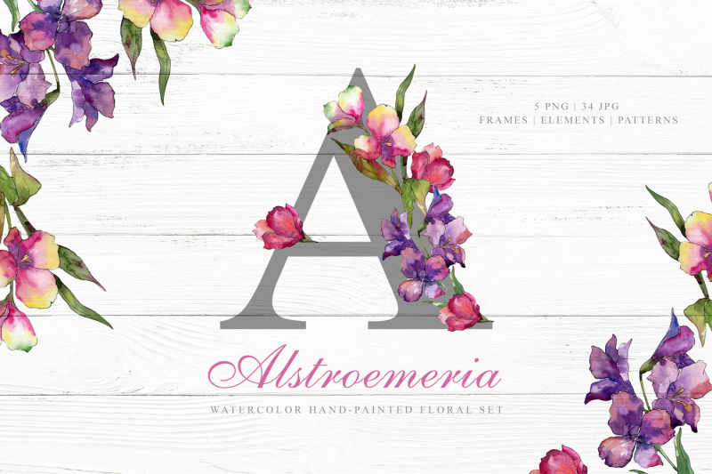 alstroemeria-watercolor-png