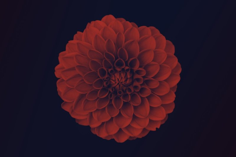 elegant-floral-brushes-for-photoshop
