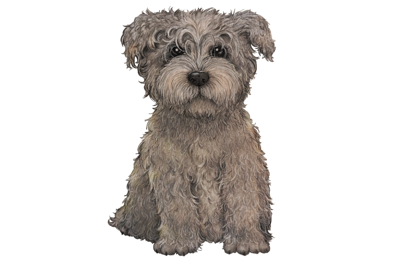 glen-of-imaal-terrier-grey-clip-art-dog-illustration