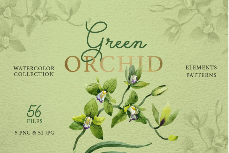 green-orchid-watercolor-png