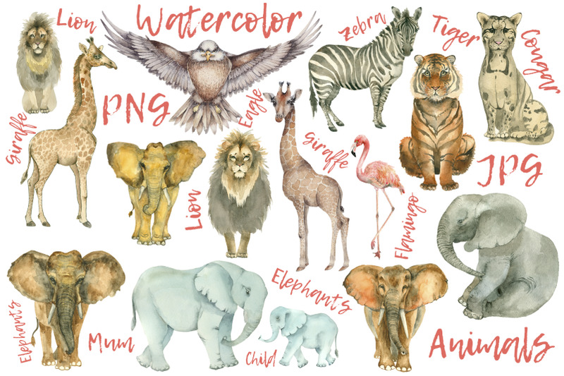 african-animals-collection-15-items