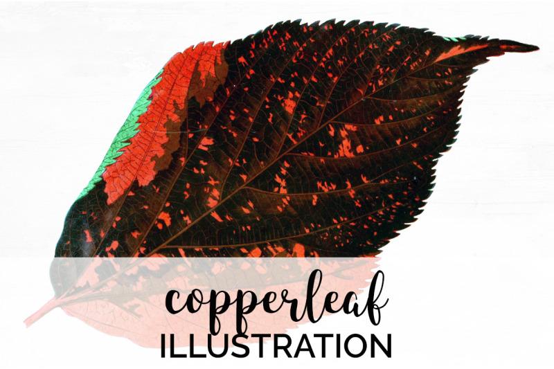 leaf-vintage-clipart