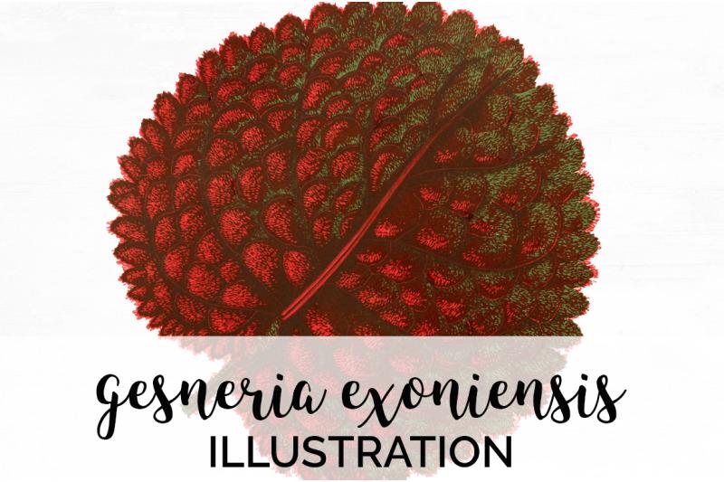 gesneria-exoniensis