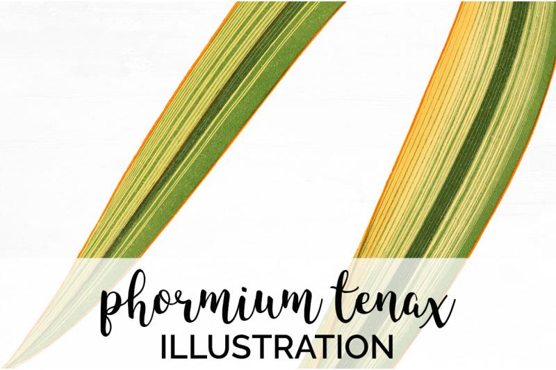 leaf-vintage-phormium-tenax