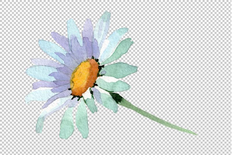 big-white-chamomile-watercolor-png