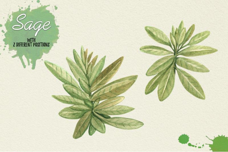 north-american-herbs