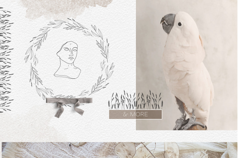 line-art-botanical-illustrations