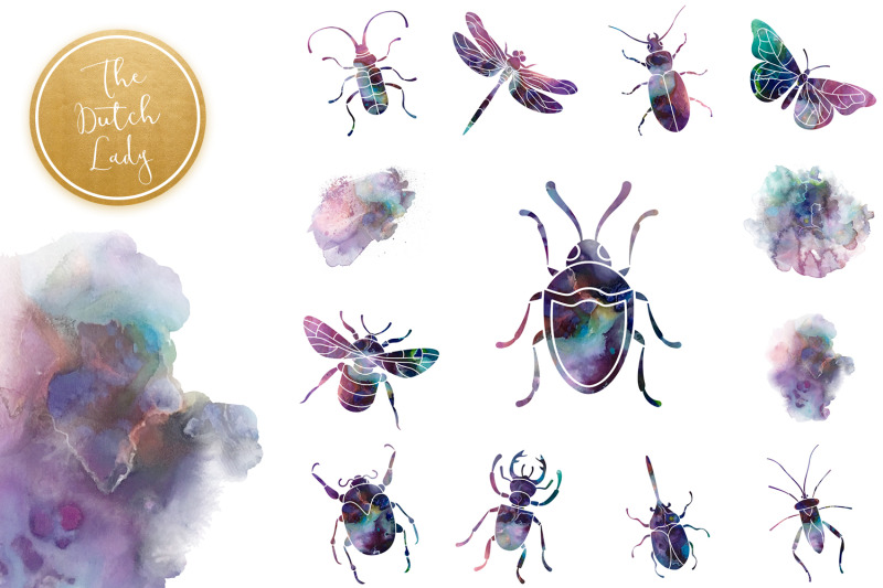 Beetles Bugs Clipart Set By The Dutch Lady Designs