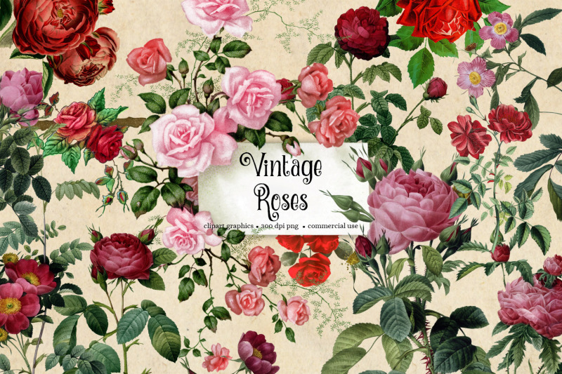vintage-roses-clipart