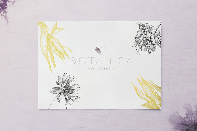 botanica-collection
