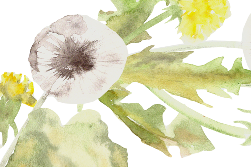 watercolor-dandelion-clip-art-wreath-and-pattern
