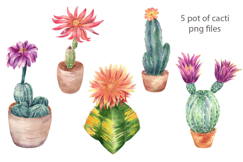 cacti-compositions
