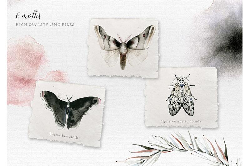 mavra-watercolor-moths-graphic-set