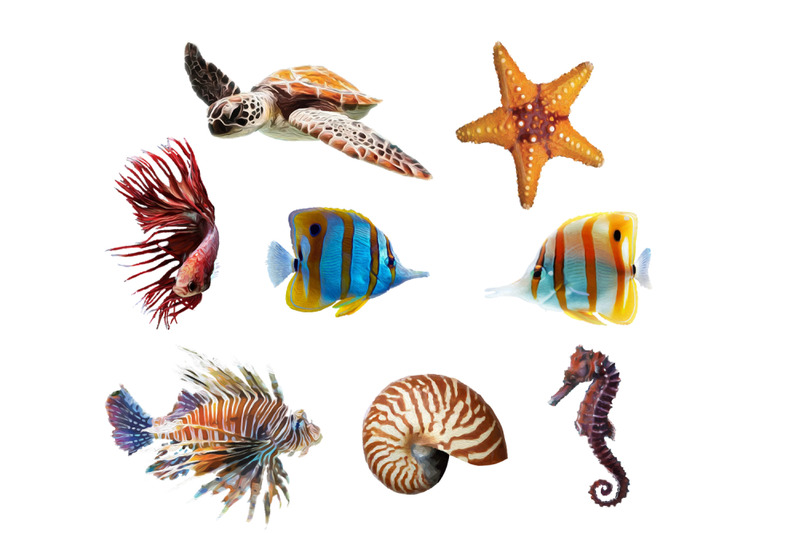 sea-life-design-bundle-sea-turtle-seashell-starfish