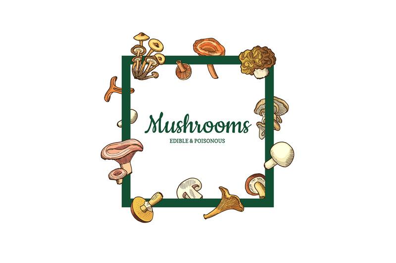 vector-hand-drawn-mushrooms-menu-text-frame