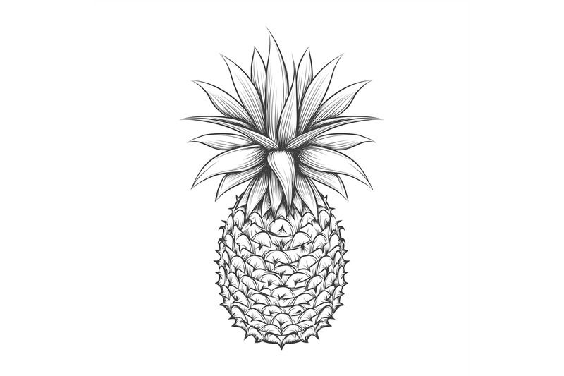 hand-drawn-pineapple