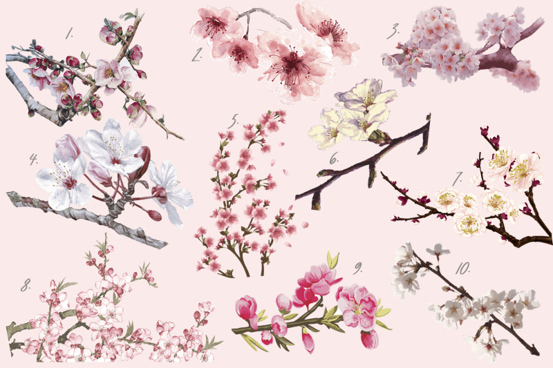 sakura-bloom-flowers-branches-trees-vector-illustrations
