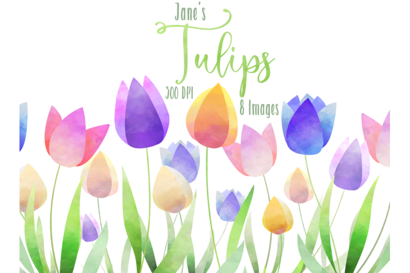 watercolor-tulips-clipart