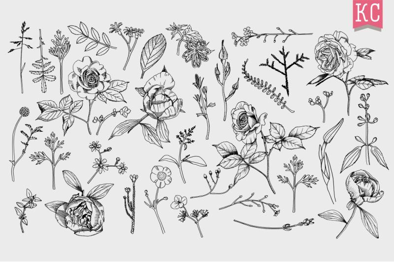 vector-botanical-illustrations