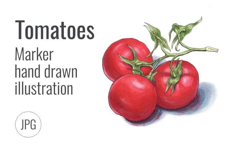 tomatoes-marker-hand-drawn-illustration