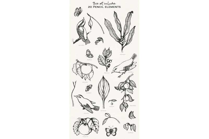 birds-amp-plants-watercolor-and-pencil-set