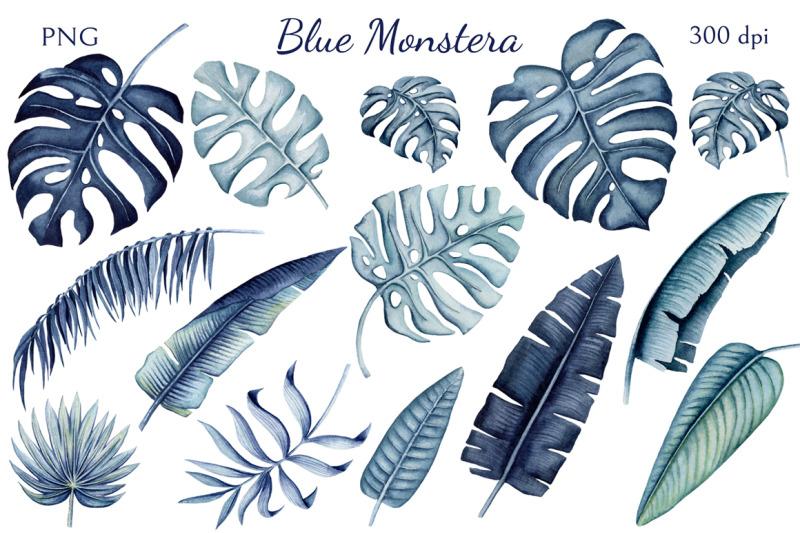 blue-monstera
