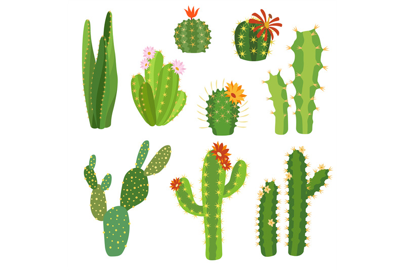 cactus-flower-bright-cacti-aloe-leaves-exotic-cactuses-plants-summer