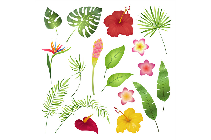 tropical-flowers-and-leaves-caribbean-tropical-flower-leaf-hibiscus-o