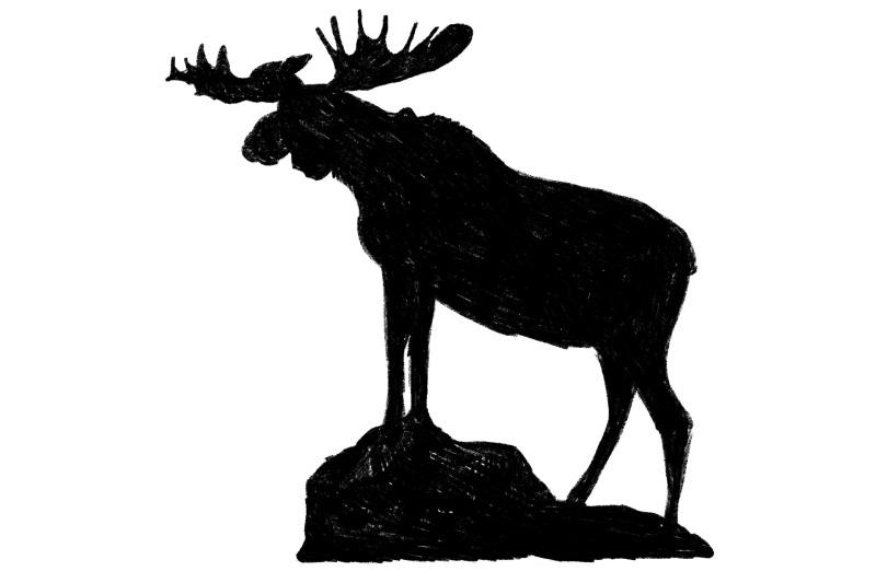 rocky-mountain-national-park-moose