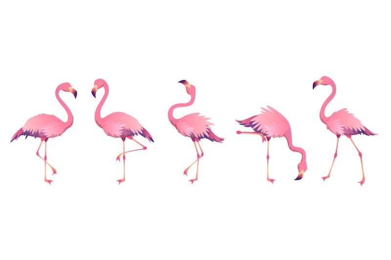 pink-flamingos-cute-flamingo-animal-exotic-nature-wild-fauna-zoo-bird