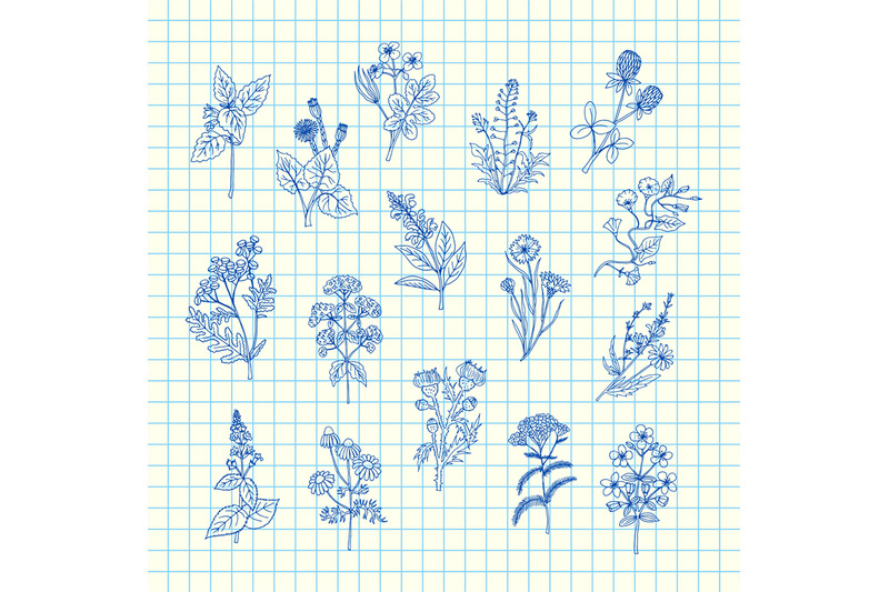 vector-hand-drawn-medical-herbs-set-on-blue-cell-sheet-background-illu