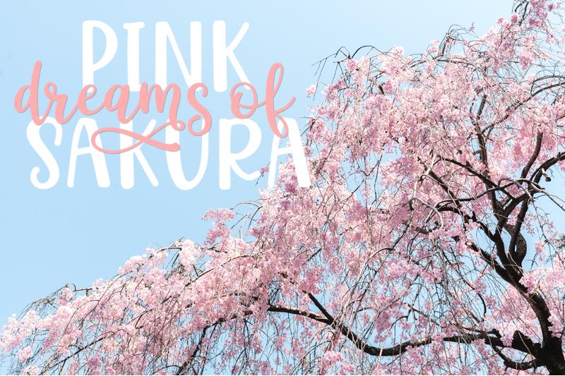 hello-sakura