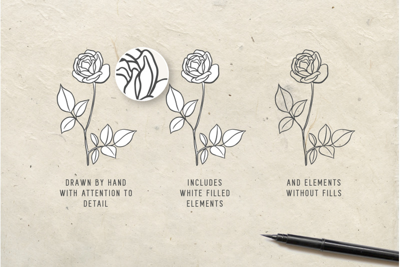 botanical-illustrations-amp-logo-kit