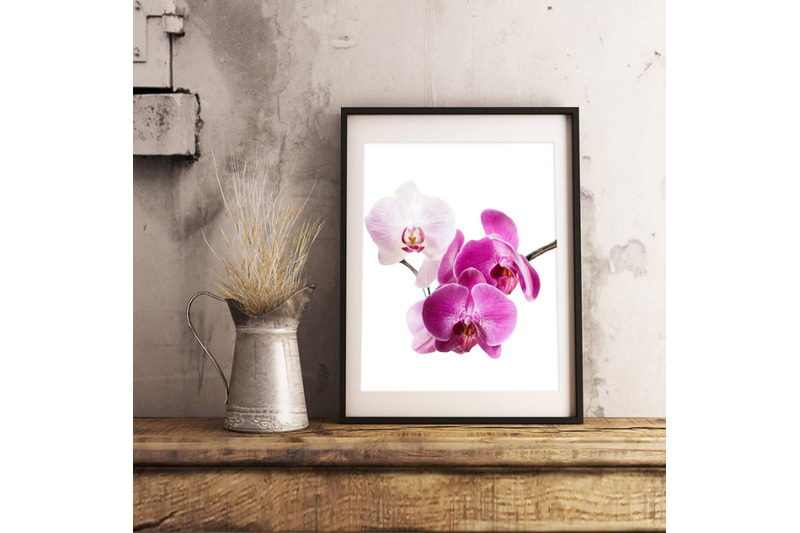 orchid-flower-file-set-4-orchids-drawings-illustrations-in-watercolor